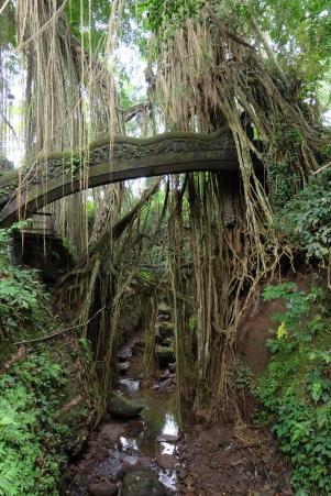 Forêt sacrée des singes