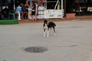 L'un des nombreux chiens errants de Bulgarie